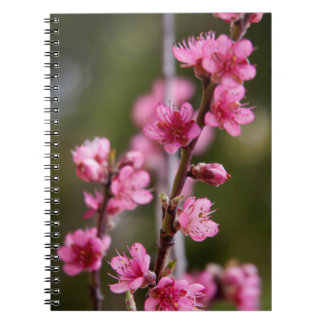 USA, California. Pink Blooms On A Tree Notebook