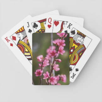 USA, California. Pink Blooms On A Tree Playing Cards