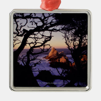 USA, California, Point Lobos, cypress tree and Silver-Colored Square Decoration