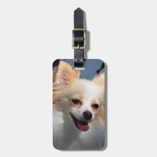 USA, California. Pomeranian Portrait Bag Tag