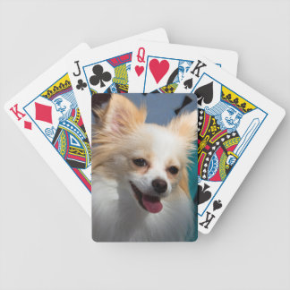 USA, California. Pomeranian Portrait Bicycle Playing Cards