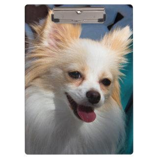 USA, California. Pomeranian Portrait Clipboard