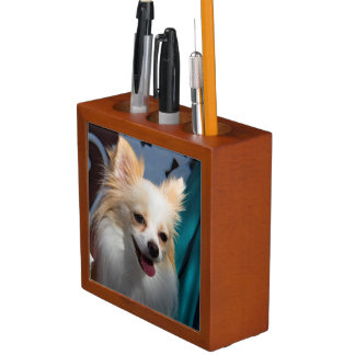 USA, California. Pomeranian Portrait Desk Organiser