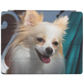 USA, California. Pomeranian Portrait iPad Cover