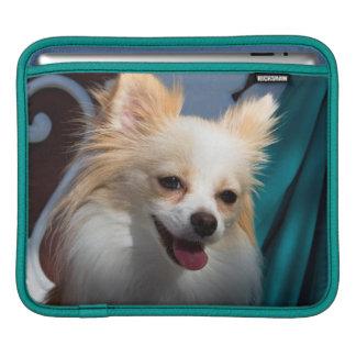 USA, California. Pomeranian Portrait iPad Sleeve