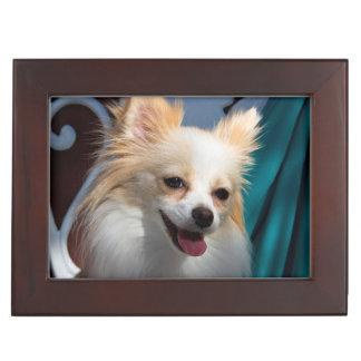 USA, California. Pomeranian Portrait Keepsake Box