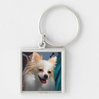 USA, California. Pomeranian Portrait Silver-Colored Square Key Ring