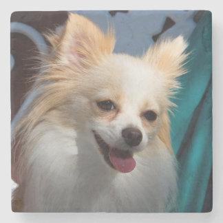 USA, California. Pomeranian Portrait Stone Coaster