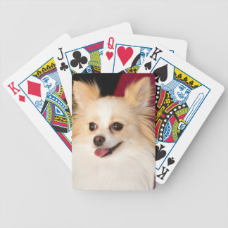 USA, California. Pomeranian Portrait With Red Bicycle Playing Cards