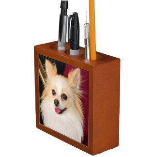 USA, California. Pomeranian Portrait With Red Desk Organiser