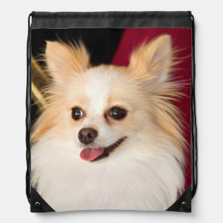 USA, California. Pomeranian Portrait With Red Drawstring Bag