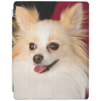 USA, California. Pomeranian Portrait With Red iPad Cover