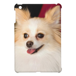 USA, California. Pomeranian Portrait With Red iPad Mini Cover
