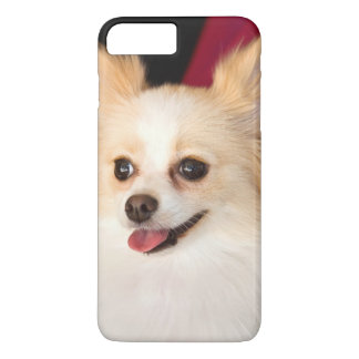 USA, California. Pomeranian Portrait With Red iPhone 8 Plus/7 Plus Case