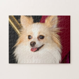 USA, California. Pomeranian Portrait With Red Jigsaw Puzzle