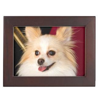 USA, California. Pomeranian Portrait With Red Keepsake Box