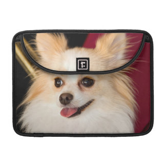 USA, California. Pomeranian Portrait With Red Sleeve For MacBook Pro