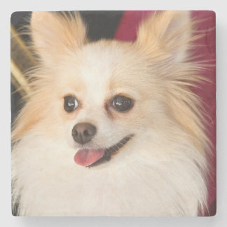 USA, California. Pomeranian Portrait With Red Stone Coaster