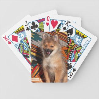 USA, California. Pomeranian Sitting Bicycle Playing Cards