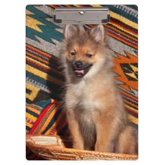 USA, California. Pomeranian Sitting Clipboard