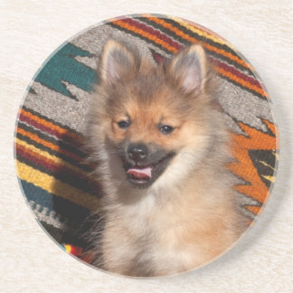 USA, California. Pomeranian Sitting Coaster