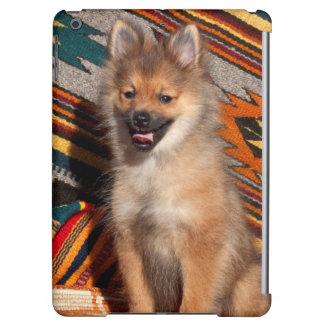USA, California. Pomeranian Sitting Cover For iPad Air
