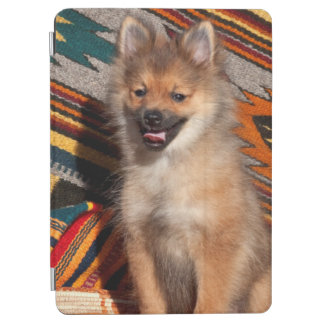 USA, California. Pomeranian Sitting iPad Air Cover