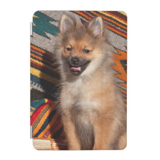 USA, California. Pomeranian Sitting iPad Mini Cover