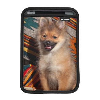 USA, California. Pomeranian Sitting iPad Mini Sleeve