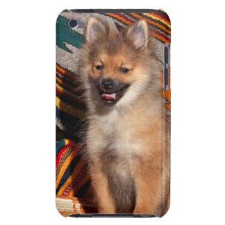 USA, California. Pomeranian Sitting iPod Touch Case-Mate Case