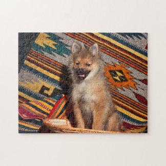 USA, California. Pomeranian Sitting Jigsaw Puzzle