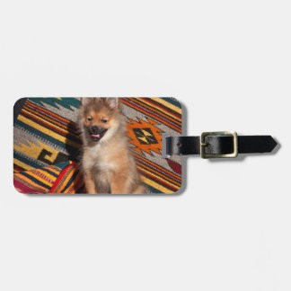 USA, California. Pomeranian Sitting Luggage Tag