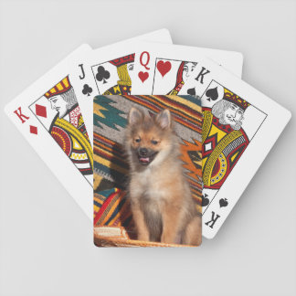 USA, California. Pomeranian Sitting Playing Cards