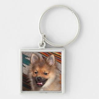 USA, California. Pomeranian Sitting Silver-Colored Square Key Ring