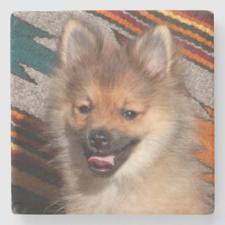 USA, California. Pomeranian Sitting Stone Coaster