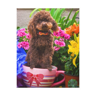 USA, California. Poodle Standing In A Coffee Cup Gallery Wrap Canvas