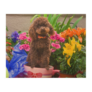 USA, California. Poodle Standing In A Coffee Cup Wood Print