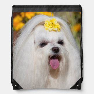 USA, California. Portrait Of A Maltese Drawstring Bag