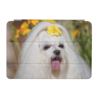 USA, California. Portrait Of A Maltese iPad Mini Cover