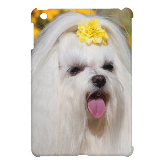 USA, California. Portrait Of A Maltese iPad Mini Covers
