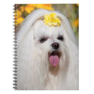 USA, California. Portrait Of A Maltese Notebooks