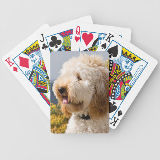 USA, California. Portrait Of Labradoodle 3 Bicycle Playing Cards