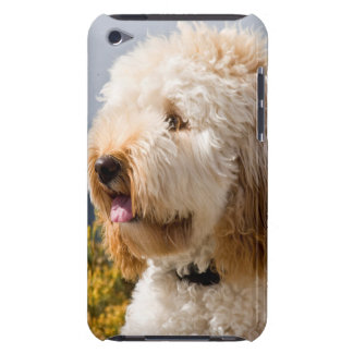 USA, California. Portrait Of Labradoodle 3 iPod Touch Cover