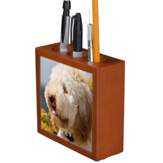 USA, California. Portrait Of Labradoodle 3 Desk Organiser