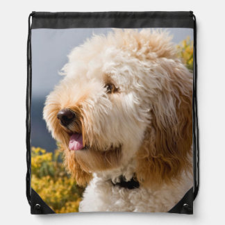 USA, California. Portrait Of Labradoodle 3 Drawstring Bag