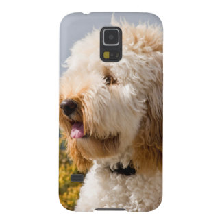 USA, California. Portrait Of Labradoodle 3 Galaxy S5 Case