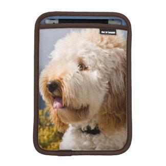 USA, California. Portrait Of Labradoodle 3 iPad Mini Sleeve