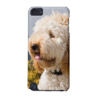 USA, California. Portrait Of Labradoodle 3 iPod Touch (5th Generation) Covers