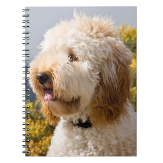 USA, California. Portrait Of Labradoodle 3 Spiral Notebook