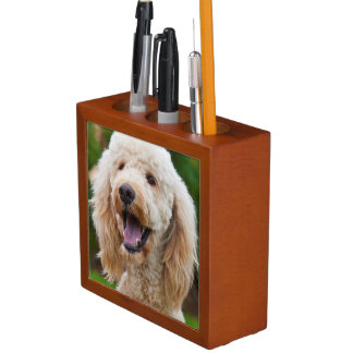USA, California. Portrait Of Labradoodle Desk Organiser